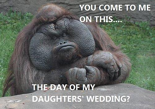 Funny picture thread!-godmonkey.jpg