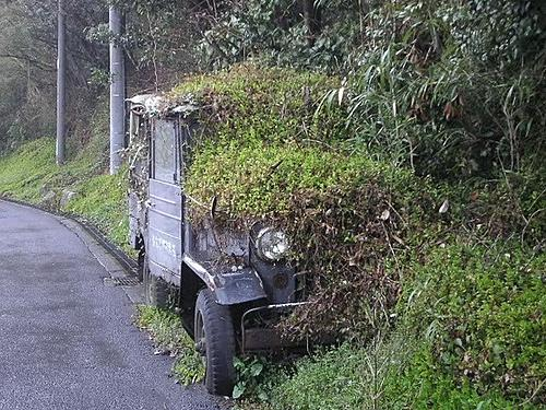Your Favorite All Time Jeep Photos-overgrown.jpg