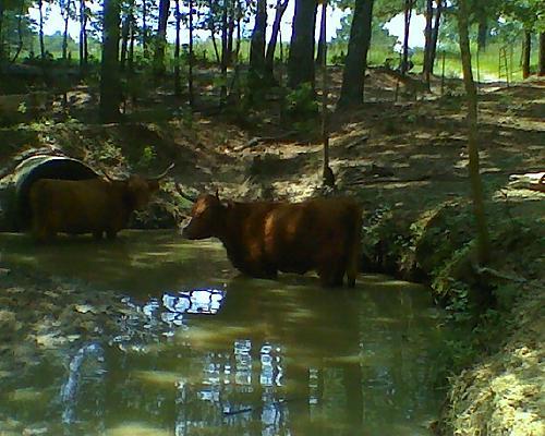 More lunch hour wheelin on ranch . . .-creek.jpg