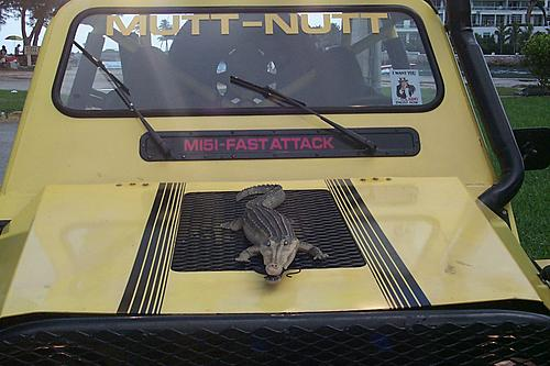 whats youre jeeps NAME??-muttnutt-005.jpg