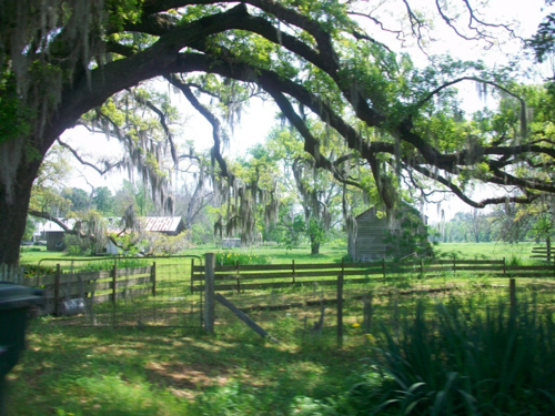 Cruising the Florida Parishes!-image-1914843694.png