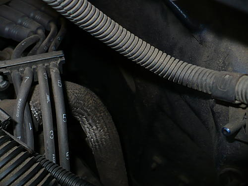 What is this monstrosic Fuel Line?-p1060974.jpg